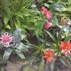【愛知】のんほいパークに行ってきた!『植物園ゾーン』の温室は以外な発見がある!