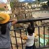 1歳半の息子と京都市動物園に行ってきた☺︎