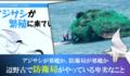 沖縄で、県民よりも米軍をまもっている日本の防衛局が、準絶滅危惧種アジサシの巣作りすらぶち壊す - ろくでなし