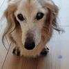シニア犬の体調管理