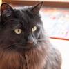 猫ログ:今日の王子、4