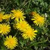 歩いている時見つけた花たち