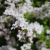 広島市役所の屋上庭園にも春が来た。