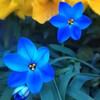 春らしくなってきた(芽吹き)