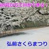 【青森】桜の川ができる?弘前さくらまつりを100倍楽しむ方法!