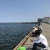小樽色内埠頭 チカ狙い サビキ釣り 3日間 2017年7月8日