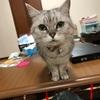 飼い猫の原因不明の食欲不振で大騒ぎした夜