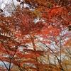 ユーシン渓谷のユーシンブルーと丹沢湖の紅葉!駐車場、紅葉の時期について