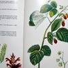 薬草の本(2)