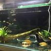 小型熱帯魚+ほぼベアタンク