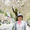 日本 背景は稲葉神社の枝垂桜