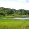 小幡緑地を歩く