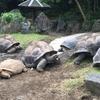 鈍足、ゆっくりのっそりでも(東京都立大島公園 動物園(カメ・ラクダ等編))