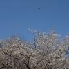 【FUJIFILM】PRO Neg. Hiで撮る横浜・根岸森林公園