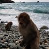波勝崎で猿を見て人間の愚かさを嘆く:後篇