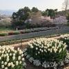 和歌山「緑花センター」入場料駐車場無料で美しい花が…