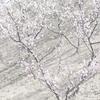 佐布里池の春の温かさを感じる梅まつり