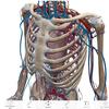 【医療】解剖学の勉強って難しい!ヒューマン アナトミー アトラスで3Dで学習してみてはいかが?実際に使ってみた感想
