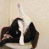 今日の黒猫モモ&白黒猫ナナの動画ー957