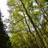 国際森林年⇒ 今年、だそうです