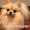 愛犬シフォンのモーニングルーティン