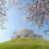 天空に咲く桜 その2