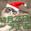 【2019年12月25日】今回のサムネイルは、猫サンタ! カード占いも始めます❤❤