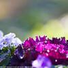 冬に見る花