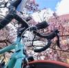 熱海桜ライド100kmで人間の感性を取り戻す