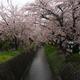 【旅行記】フォトジェニックな京都旅!初めて一眼で桜を撮ってきた3!マックさんの家~東寺(2017.04.11)