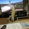世界ネコ歩きとライチ