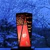 No.266 「木の灯り」の「桜」~夜明けの桜