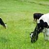 1位はまさかの・・・!みんなが飲んでいる牛乳をランキング形式で紹介!