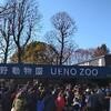 南紀白浜で何度もみたパンダを、未だ上野動物園ではみていない。
