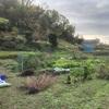 """畑からこんにちは! 1128    """" 久しぶりに畑へ… """"   #家庭菜園 #野菜 #趣味の園芸"""
