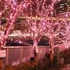 目黒に咲く「冬の桜」の絶景ともう1つの目黒川イルミネーション