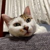 【臆病な猫】日々の生活と私の体験談⑦!!