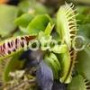 樹木医師の食虫植物の謎