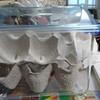 アシダカグモ拒食対策第一弾:Sサイズコオロギ