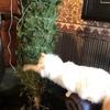 スーパー紙類はどっさり:クリスマスツリーを室内へ