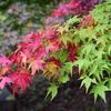 栃木県 赤面山(あかづらやま)初チャレンジが・・・那須塩原の紅葉にチェンジ!