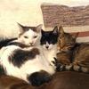 猫たちの休息と、小さな雑草