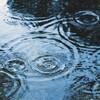 作業中にずぶ濡れになると急激にやる気がゼロになりますね。(水曜日、曇りのち雨)