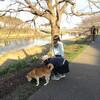 めぐる 時間と、川べり 散歩