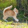 厳選!かわいい猫のフリー画像を50枚集めてみた