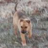 ここ最近の保護子犬ミメ