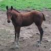 馬に与える物理力としての重心の移動(94鞍目)