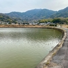 磐座八幡大神社の池(仮称)(愛媛県大三島)