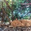 【猫がたくさん】スリーマ地区をお散歩【マルタ島 観光】