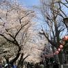 錦糸公園 桜まつり 2018年 (2)